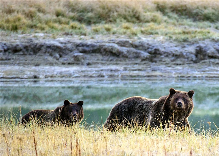 Image: FILES-US-ENVIRONMENT-WILDLIFE-BEARS