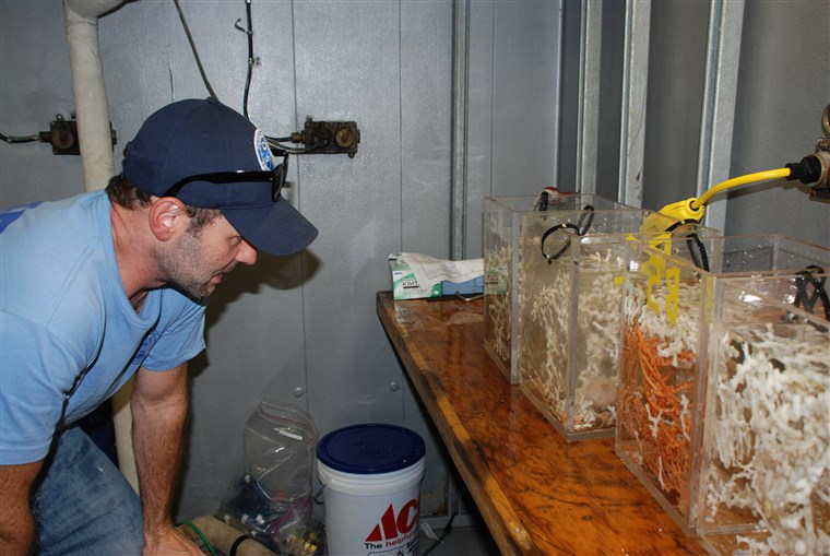 Image: Erik Cordes inspects the biobox inserts filled with corals after a dive