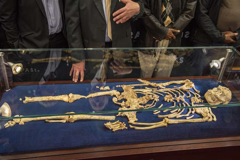 """""""Little Foot"""" may be a previously unrecognised hominin species"""