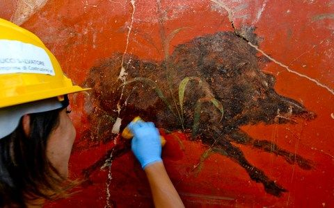 New areas of Pompeii are being excavated, bringing to light treasures such as this fresco of a wild boar - Credit: Ciro Fusco/Ansa