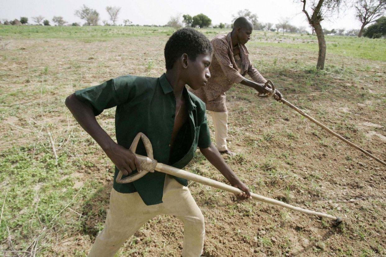 ニジェールでは国民の80%以上が農業に従事している。この農業への高い依存度が、気候変動による影響を大きくすると<span>アメリカ地質調査所</span>の報告書は指摘する。 <br><br> 2013年には世界銀行のエコノミスト、エル・ハッジ・アダマ・トゥーレ氏が次のように述べている。「気候リスクにさらされ、さらに内陸国であるニジェールは、世界で最も温暖化の影響を受けやすい国のひとつです」「状況を複雑にしているのは、国内と地域それぞれで抱える過激派です。これらの要因が農業に影響を与えることで、食料や栄養の問題に発展します」 <br><br> ニジェールは世界で最も出生率の高い国だ。女性1人あたりが産む子供は7.6人で、2031年までに人口が2倍に増加すると予想されている。気候変動で農業が打撃を受ければ、多くの国民が食料不足に苦しむ可能性がある。 <br><br> 上の写真は農作業をするニジェール人の少年と父親だ。2005年に撮影された。