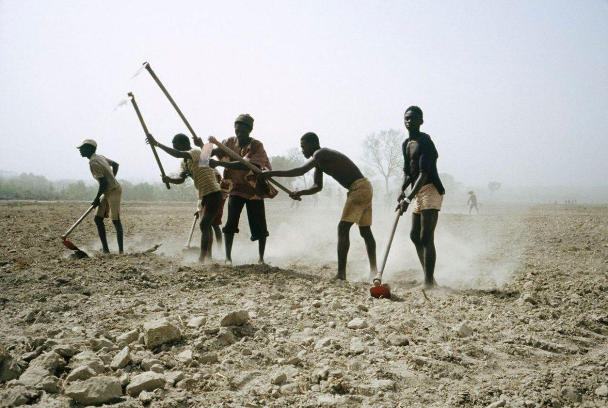 ギニアビサウ政府が作った報告書は、国の大半が低地の湾岸地域で日差しが強いギニアビサウは、気候変動によって深刻な影響を被るだろうと警告している。 <br><br> ギニアビサウもかんがいではなく、雨に頼って農業をしており、これがすでに問題となっている。 <br><br> 報告書には「気温の上昇にともない、あちこちで雨の降り方が不規則になっている。そして地表から蒸発する水蒸気の量が急激に増えたことで、農作物の生産が落ち、土壌が浸食されるようになった」と書かれている。 <br><br> 上の写真は、ギニアビサウの都市コントゥボエル近郊で水田を耕す農夫たちだ。
