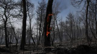 A lone tree-trunk remains on fire amid a blackened blackened forest following a fire