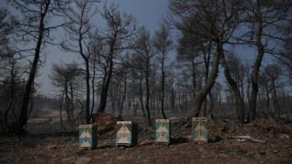 Beehives sit amongst the charred woodland on the island of Evia