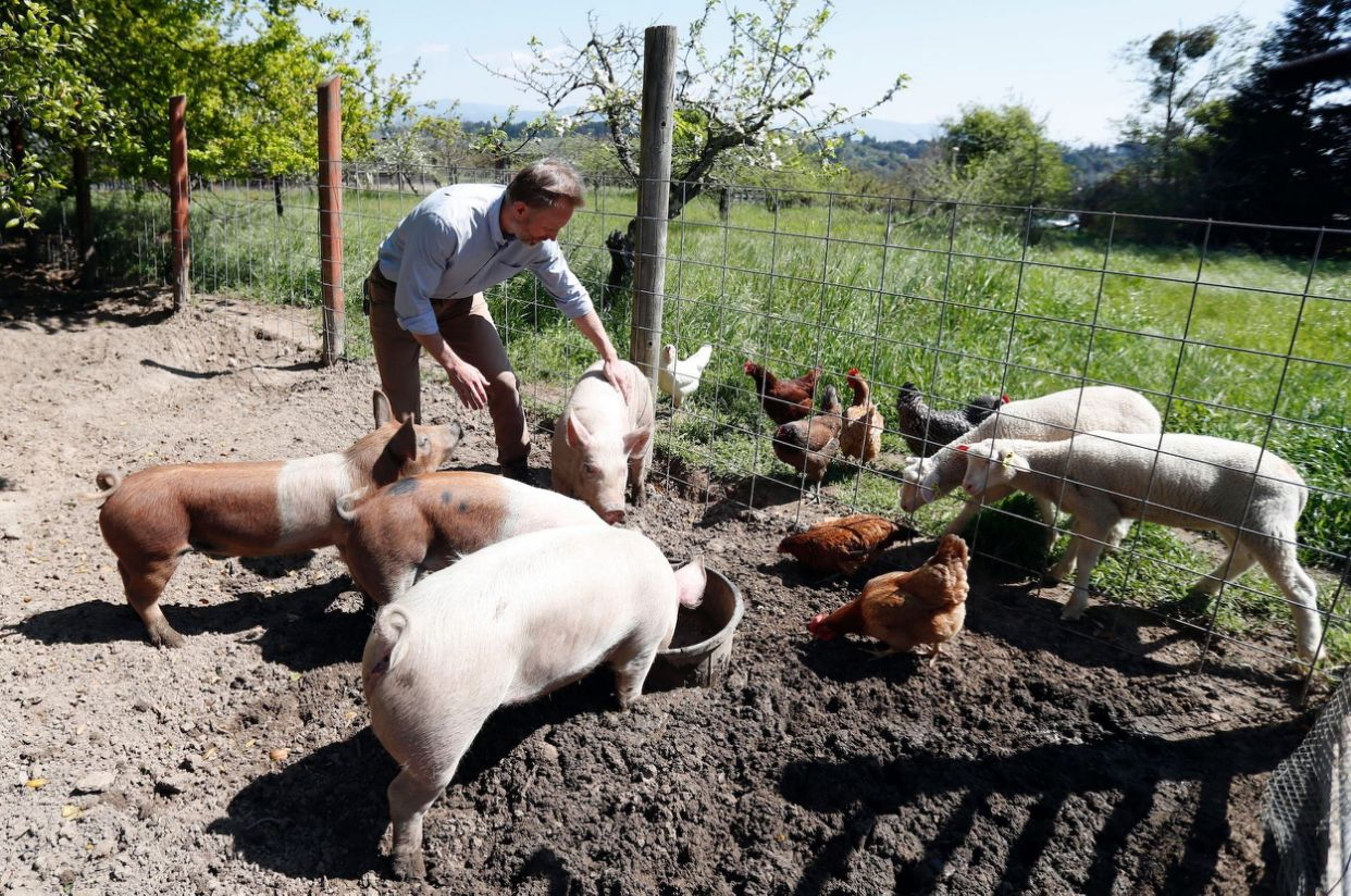 doomsday prepper raises chickens pigs and sheep