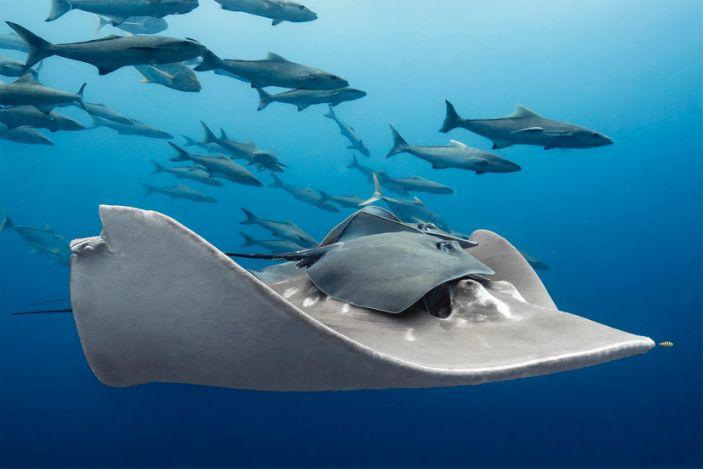 Ocean Art Marine Life Behavior1_Paula_Vianna_A friendly ride