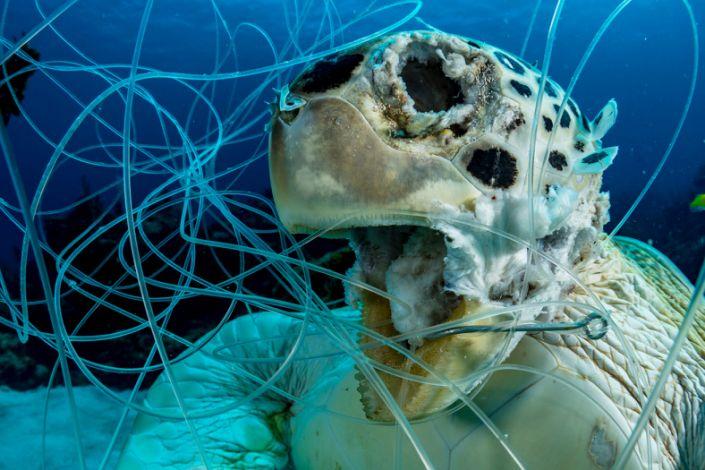 Ocean Art Underwater Conservation1_Shane_Gross_Victim