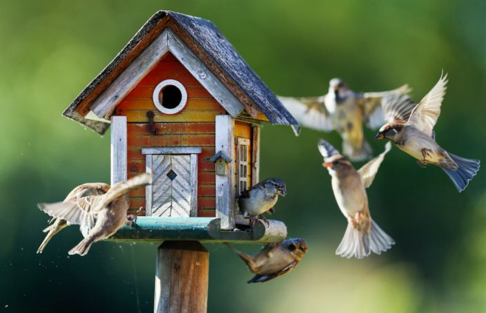 Reuters best wildlife animal images of 2015 Sparrows