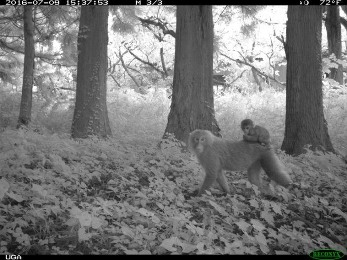 Fukushima monkeys