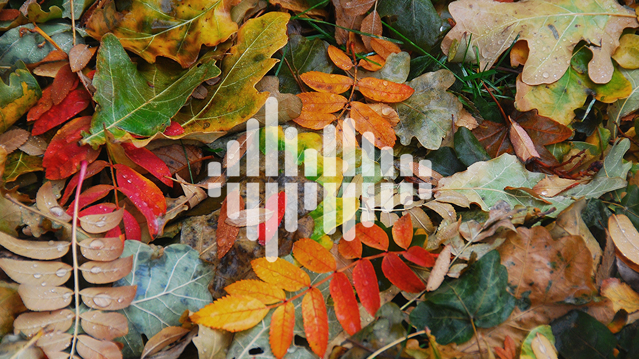 different color leaves with podcast symbol overlay