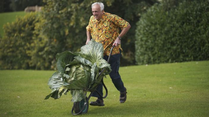 Giant cabbage shown at the Harrogate Show in 2017