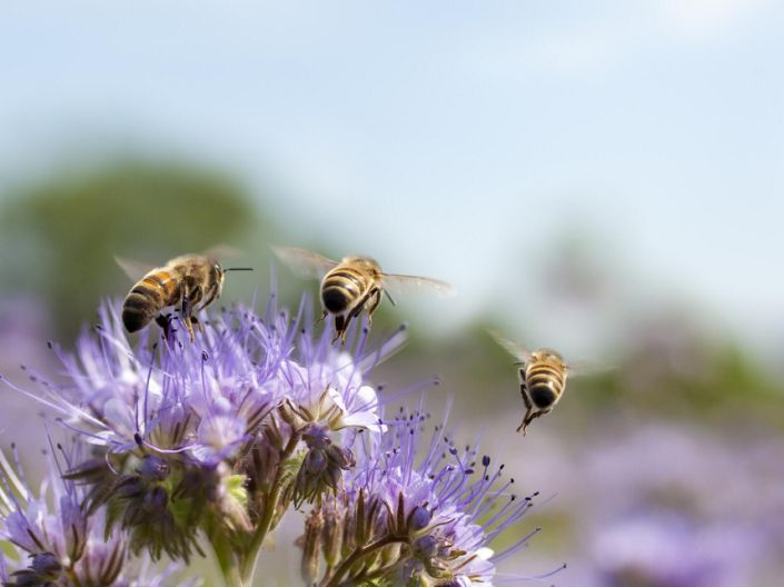 'Without [bees], we would have no apples, tomatoes, strawberries, peppers, cherries, chocolate, coffee, and much much more' warned Dave Goulson, professor of biology at the University of Sussex: Getty