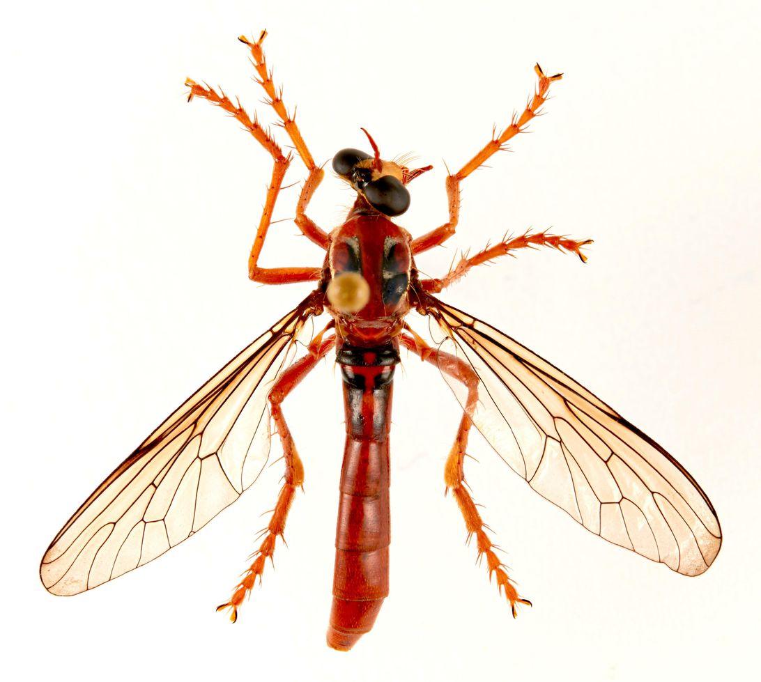 deadpool-fly