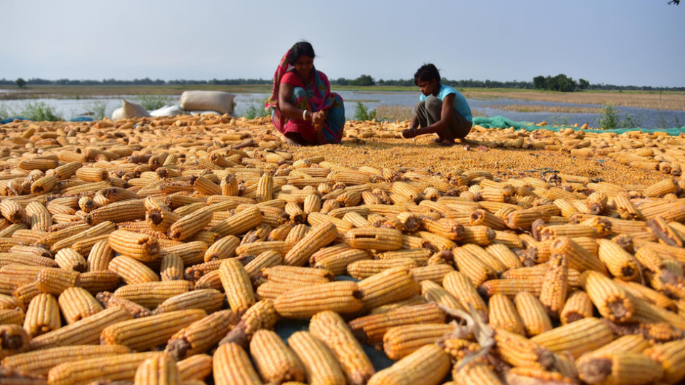 Poorer countries will see the worst impacts on food prices