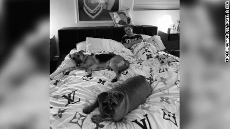 The renamed bulldog lounges at her new home with singer Miley Cyrus.