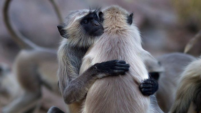 We are not the only primates that hug