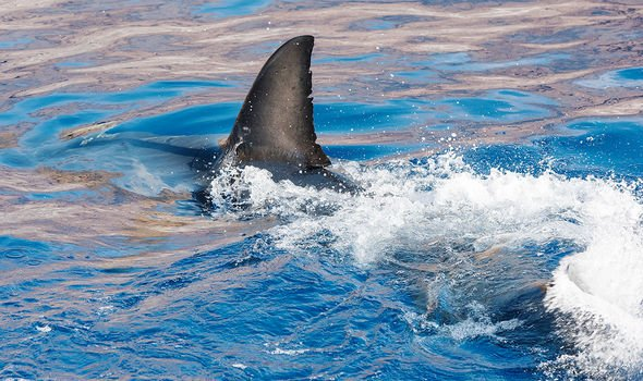 Experts worry that sharks are at risk of becoming extinct