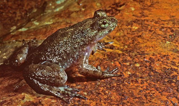 Frogs caused havoc in Greece in 2010