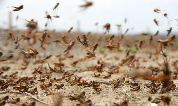 Locusts have ravaged crops in East Africa