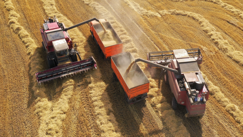 Wheat prices could be affected by the rise in technologies to remove CO2