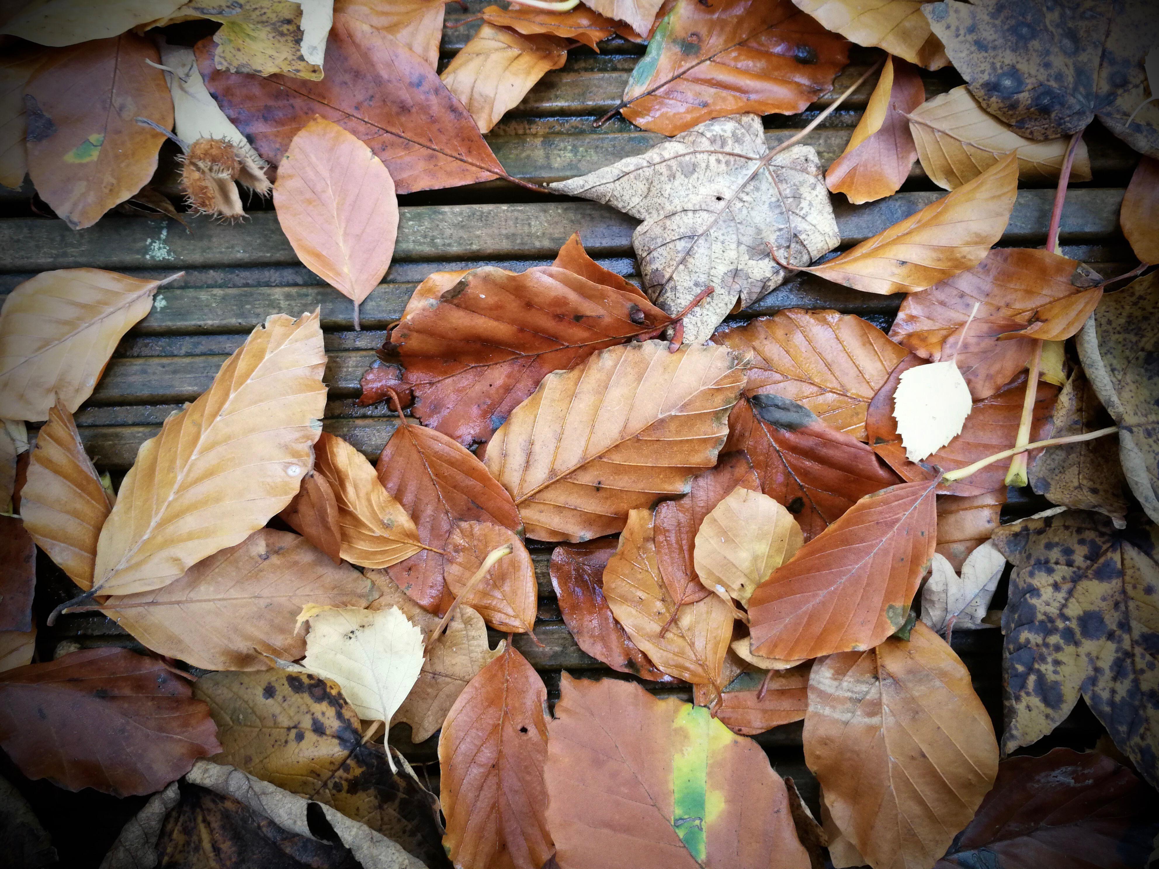 leaves-mate-9-camera-2