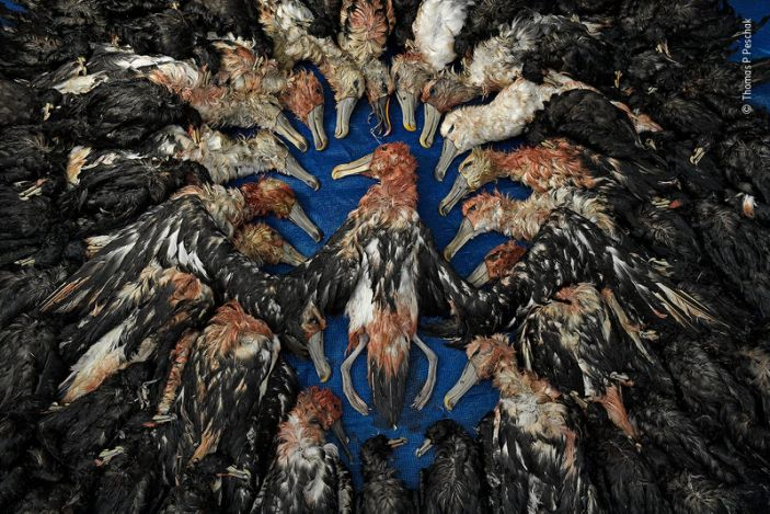 """A collection of dead seabirds accidentally caught by Japanese tuna-fishing boats off South Africa's coast in 2017. <p class=""""copyright"""">Thomas P Peschak/Wildlife Photographer of the Year</p>"""