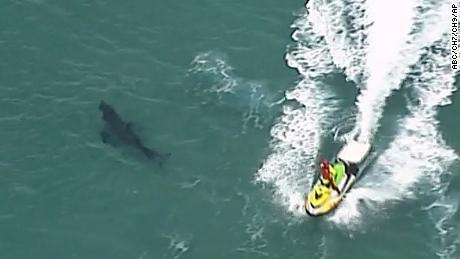 Australian surfer dies after being bitten by a great white shark nearly 10 feet long