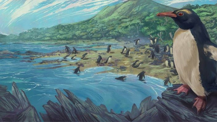 "An artist's impression of the Eudyptes atatu penguin in New Zealand 3 million years ago. <p class=""copyright"">Simone Giovanardi/Massey University</p>"