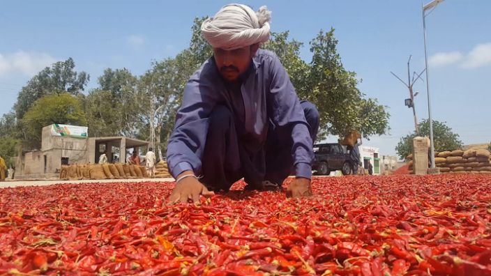 """The wholesale chili market in Kunri, Pakistan, is one of the largest in the world. <p class=""""copyright"""">Kashif Khan for Business Insider Today</p>"""