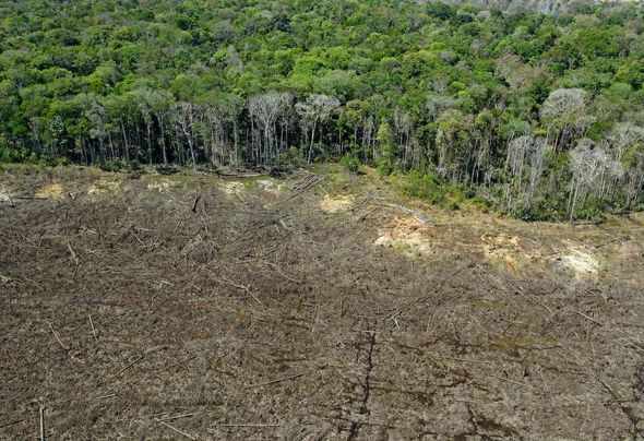 Rainforests: Much of the world's rainforests are under threat from agriculture expansion