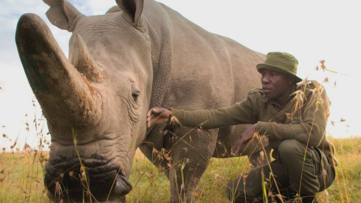 Two female rhinos are the last of their kind