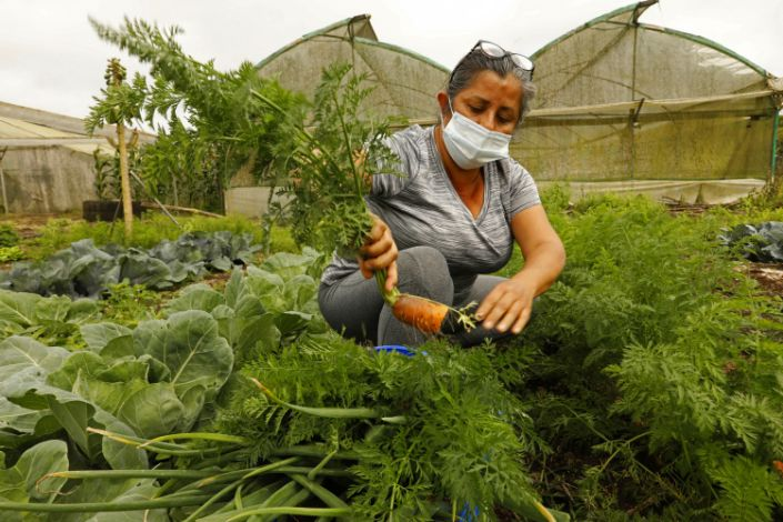 A woman in a mask kneels amid greenery in her farm holding a carrot