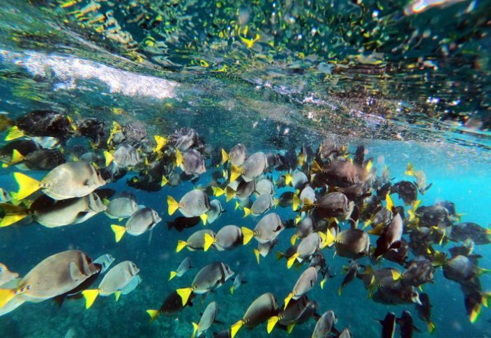 """Just south of Galapagos' Marchena Island is a dive spot known by locals as the """"fish arena."""""""