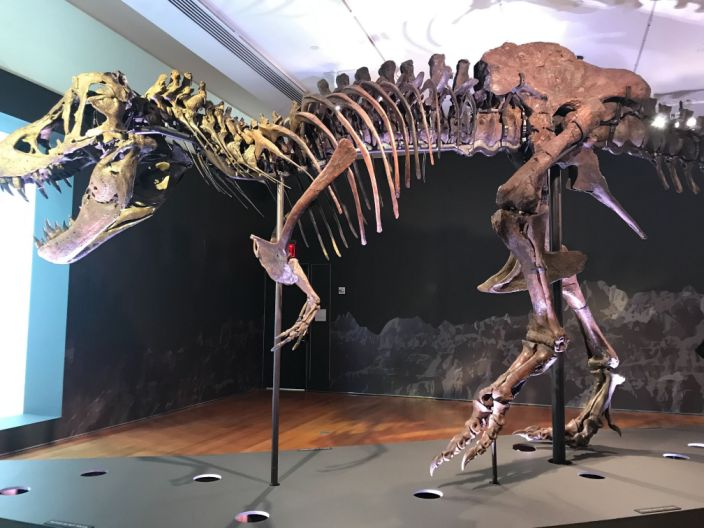 """The T rex named Stan was auctioned off at Christie's in New York City for $31.8 million on October 6, 2020. <span class=""""copyright"""">Bob Bryan/Business Insider</span>"""