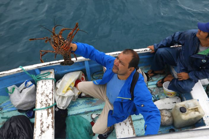 A man in a blue jacket sitting in a small wooden boat raises a lobster above his head